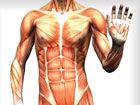 Body Info